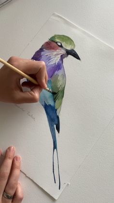 Lilac Breasted Roller by Polina BrightYou can find Aquarell tiere and more on our website.Lilac Breasted Roller by Polina Bright Watercolor Painting Techniques, Watercolour Painting, Drawing Techniques, Pencil Painting, Watercolors, Watercolor Sketch, Watercolor Bird, Watercolor Hummingbird, Seascape Paintings
