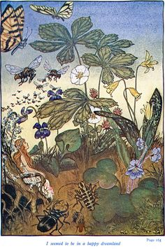 Milo Winter  Princess Goldenhair and the Wonderful Flower  Flora Spiegelberg Rand McNally 1915