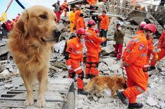 Cómo prepararte y preparar a tu perro en caso de un terremoto