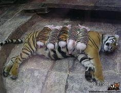maternidade2