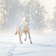 Horses, Snow