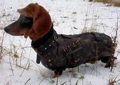 Perros entrenados por el ejército ruso.  I dont kno what this says.