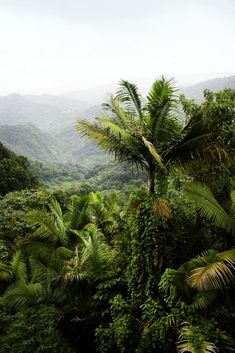 El Yunque Rainforest - Map and Photos #PuertoRico #Travel