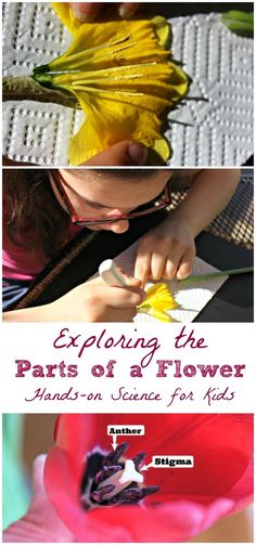 Parts of a flower | dissection | nature activity | plant biology for elementary and middle school