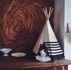 Cat tipi for Chloe