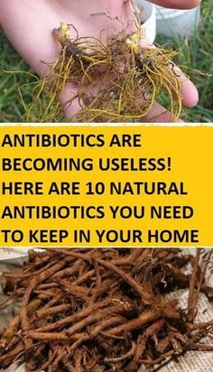HERE ARE 10 NATURAL ANTIBIOTICS YOU NEED TO KEEP IN YOUR HOME