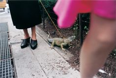 Flak Photo: Jeff Mermelstein, woman walking an iguana I love the mystery of not seeing the owner's face. Why is an iguana on a leash walking down the street? It is not a common site to see.