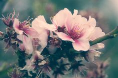 flowers by m▲tthieu cha♥igny, via Flickr