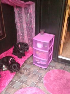 1000+ images about Dog rooms on Pinterest | Dog bedroom ...
