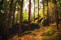Fotografía central-european woods por Kordula Palser en 500px