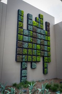 Vertical Garden: Wall of succulents.