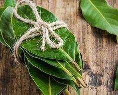 Laurel Leaves, Bay Leaves, Plant Leaves, Healthy Tips, Healthy Hair, Honey Brown Hair, In Cosmetics, Combination Skin, Health Fitness
