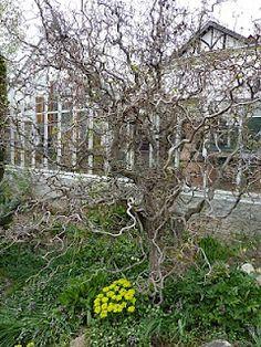 Romancing the Home -Harry Lauder Walking stick