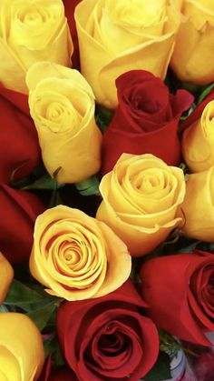 Rose Flowers, Wedding Flowers, Red And Yellow Roses, Rose Pictures, Backgrounds, Plants, Roses, Rose Petals, Plant
