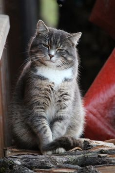 """14 Cats That Have The """"If Looks Can Kills"""" Stare Down - World's largest collection of cat memes and other animals Cute Cats And Kittens, I Love Cats, Crazy Cats, Cool Cats, Kittens Cutest, Funny Cats, Funny Animals, Cute Animals, Animal Memes"""