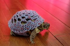 This turtle has a crocheted outfit.  That is all.