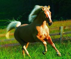 """Reminds me of my old horse, """"Pal Palomino"""". (Palomino TWH named """"Ivory Pal"""".)"""