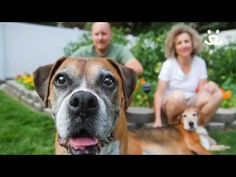 In honor of Adopt a Senior Pet Month this November, we asked you to share stories about adopting a special senior pet. The deluge of stories and photos that came pouring in was nothing short of amazing, and we're excited to share with you a few of our favorites in this heartwarming video.