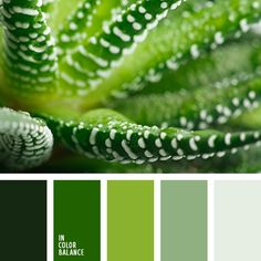 Gorgeous greens!