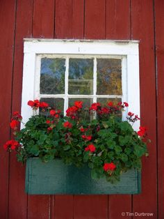 Red flower window box. Add sweet potato vine, purple petunias. Something white and lacy.