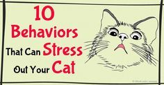 Many stress triggers in cats can be avoided when you understand her basic nature and provide environmental enrichment. http://healthypets.mercola.com/sites/healthypets/archive/2016/01/09/stress-triggers-for-cats.aspx