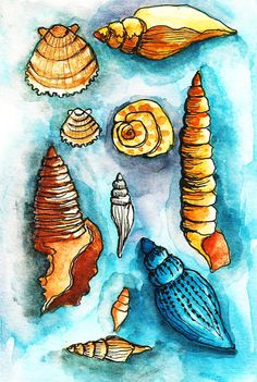 Alisa Burke — shell study matted art print I love this, love the colors love the shells. Sea Life Art, Sea Art, Alisa Burke, Watercolor Journal, Watercolor Techniques, Art Sketchbook, Copic, Art Lessons, Book Art