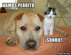 Vamos perrito, ¡Sonríe! Vía: PilloSitio.com #humor #animales #gato #perro