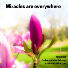 Miracles are everywhere!  FOLLOW YOUR BLISS Challenge 21 Days of Celebrating {FREE}  Are you ready to increase your capacity for fun, joy, & more?  Join us: http://www.rachelroseboucher.com/bliss/  #blissblast  #followyourblisschallenge  #lawofattraction #followyourbliss