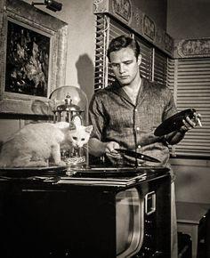 Marlon Brando - Amerykański aktor, znany przede wszystkim z ról w takich filmach jak Tramwaj zwany pożądaniem, Na nabrzeżach, Dziki, Ojciec chrzestny (prawdopodobnie jego najbardziej rozpoznawalna rola) czy Czas apokalipsy. http://www.kotysos.org/daj-procenta-na-kocieta/