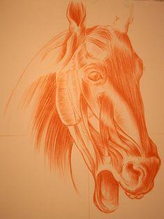 Muso di cavallo realizzato a sanguigna