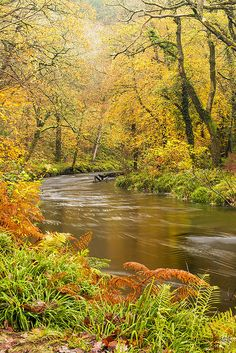 Autumn in Dartmoor National Park, England. Love this rushing autumn river! Beautiful World, Beautiful Places, Landscape Photography, Nature Photography, Dartmoor National Park, Autumn Scenery, Nature Scenes, Amazing Nature, Beautiful Landscapes