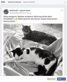 CAT.KRAFT-SMELLWELL Zeolith BIO Deo fürs Katzenklo Cats, Animals, Litter Box, Gatos, Animales, Animaux, Kitty, Cat, Cats And Kittens