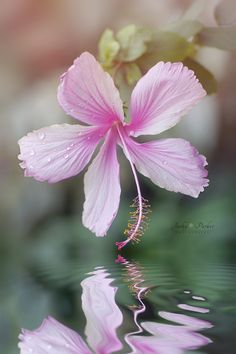 ~~Reflect   Hibiscus and water reflection   by Jacky Parker~~