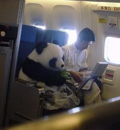10 Ways Pandas Are Just Like Us