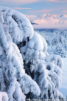 Snow Vista, Chugach National Forest, Alaska photo via alexia