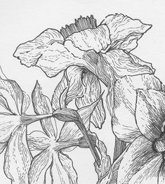 People Art, Daffodils, November, Bloom, Contemporary, Drawings, Illustration, Flowers, Plants
