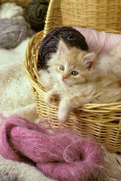 ✯ Kitten In The Yarn