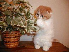 Meow rawr  #cute