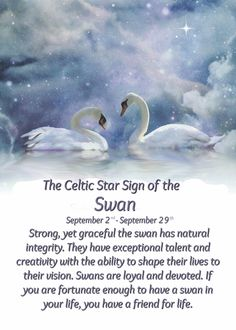 Send a Swans and Zodiac Birthday Card with your own Handwriting. Signed, sealed, delivered at no extra cost! Quality cards made in the USA. Designed by Stephanie Laird Photography. Spirit Animal Totem, Animal Spirit Guides, Animal Totems, Celtic Zodiac Signs, Celtic Astrology, Animal Meanings, Animal Symbolism, Libra Quotes Zodiac, Capricorn Sign