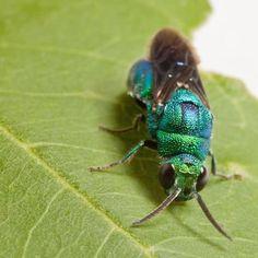 Feds Unleash Millions of Wasps on 24 States #Weird #WeirdNews