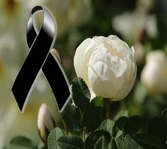 Enrique Iglesias, Bereavement, Bird Art, Happy Birthday, Flowers, Plants, Cards, Terracota, Sadness
