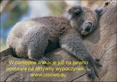 Cisowo,Poland -www.cisowo.eu