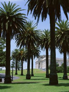 Auckland Domain, New Zealand Used to go here heaps of times when we lived in Auckland. Big building in background is Auckland Museum I was in that Musem too W. North Island New Zealand, South Island, Tasmania, Garden Pavillion, Big Building, Auckland New Zealand, State Of Arizona, The Beautiful Country, Small Island