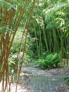 Bamboe bos        Schellinkhout Noord Holland
