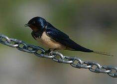 Bird Feeders, Birds, Youtube, Animaux, Bird, Youtubers, Youtube Movies, Teacup Bird Feeders