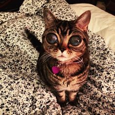 """Matilda the """"Alien Cat"""" just wants to cuddle!"""