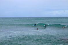 A beginner friendly surf spot in front of Turtle Bay. Turtle Bay の目の前で、ビギナーに優しい波が割れている。子供たちに教えるにいいかもね?