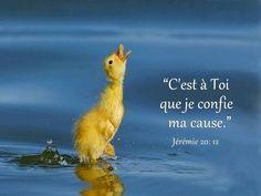 La Bible - verset illustré - Jérémie 20:12 C'est à toi que je confie ma cause