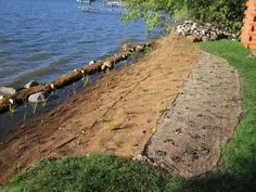 Shoreline Restoration Project – Using Native Plants to Control Erosion and Beautify the Lakeshore
