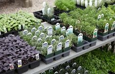 Start a culinary herb garden. Herbs to grow; Basil, Chives, Lavender, Mint, Oregano, Parsley, Rosemary, Thyme,Cilantro,and save the best for last Garlic.